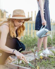 Potager : que planter au mois de mai ?