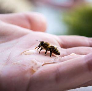Yoga des abeilles