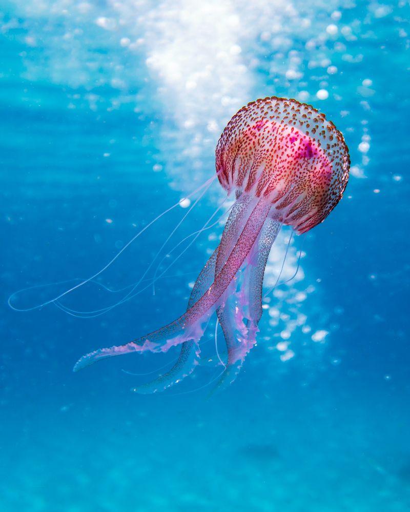 Piqure de méduse remède naturel