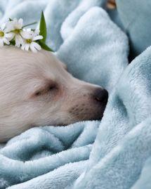 Fleurs de Bach pour animaux de compagnie
