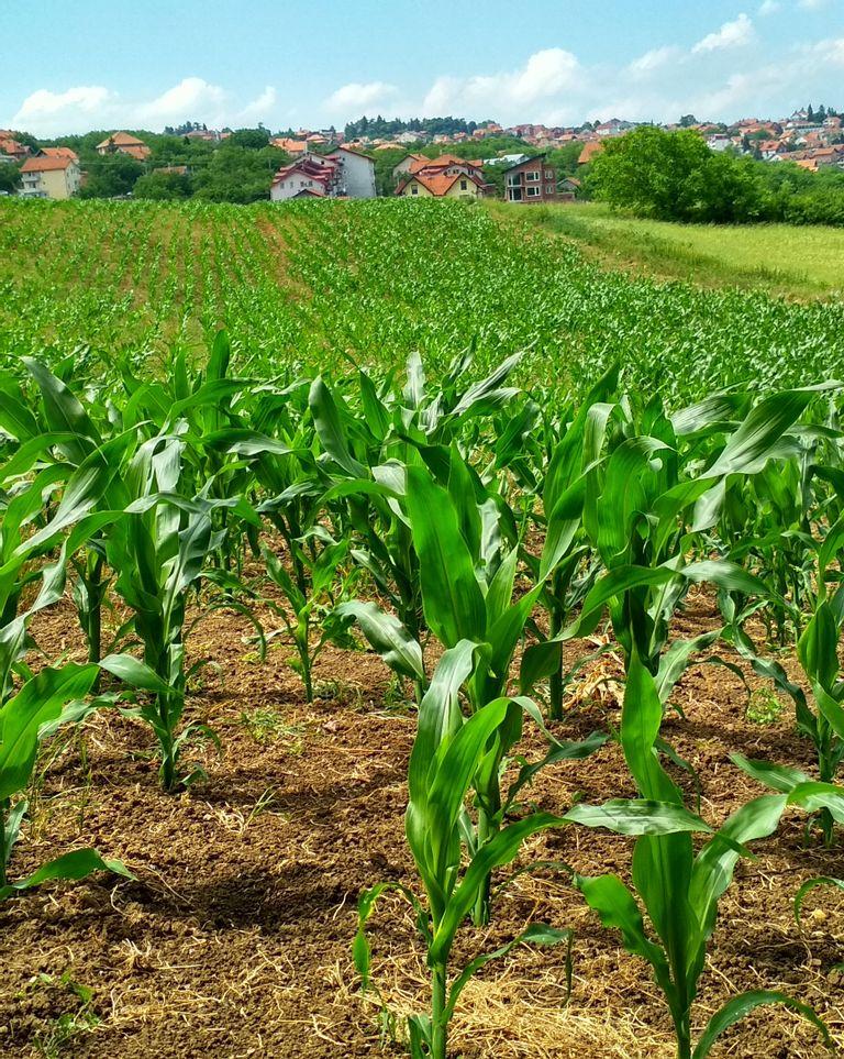UE : un plan pour agriculture bio
