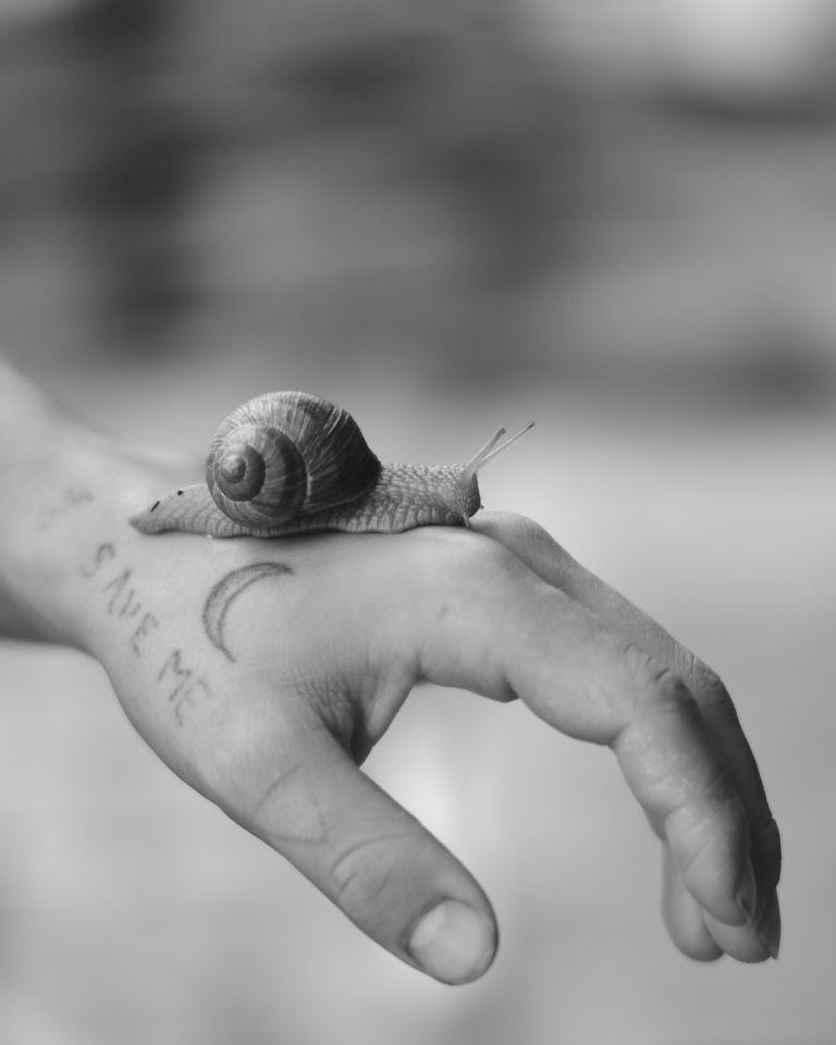 Slow Power, le pouvoir de la lenteur