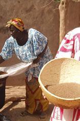 Le fonio, la céréale sacrée du Mali
