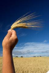 Farine bio : guide shopping du pain bio