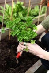 Jardiner bio : les 10 premiers conseils
