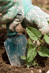 Naturen, jardiner au naturel