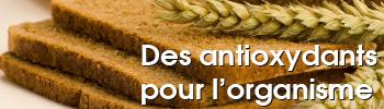 Des antioxydants pour l'organisme