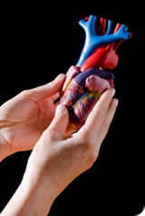 Maladies cardiovasculaires et vitamine D