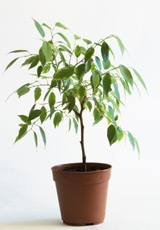 ces_plantes_qui_ne_manquent_pas_dair