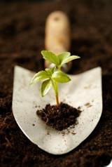 Le développement durable reste une priorité pour les citoyens