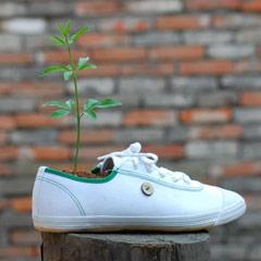 Planter un arbre…