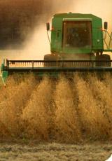 Industrie de l'agro-alimentaire bio : un oxymore ?