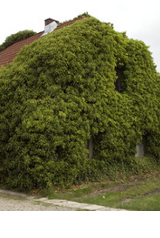 Lutter contre la pollution avec la végétation