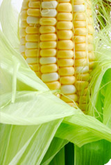 Rejet de la loi OGM