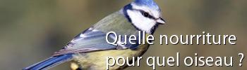 Les oiseaux de la nature