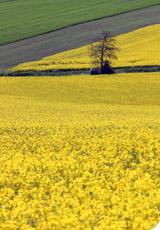 Le pari de l'agriculture biologique