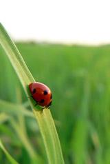 Pesticides, finissons-en !