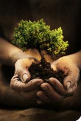 Plantez 1 arbre en 2009