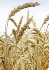 L'agriculture bio, retour à la terre