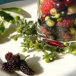 Salade de fruits à la camomille odorante